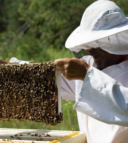 beekeeping-2-rafael-connieskitchen