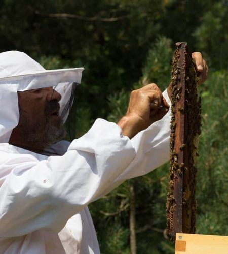 beekeeping-rafael-connieskitchen