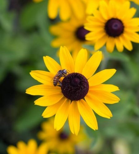 bees-flowers-connieskitchen.jpg