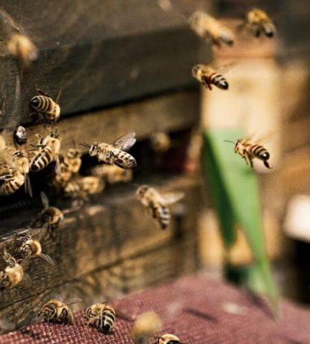 honey-bees-box-conniskitchen.jpg